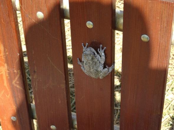 lucketts froggie